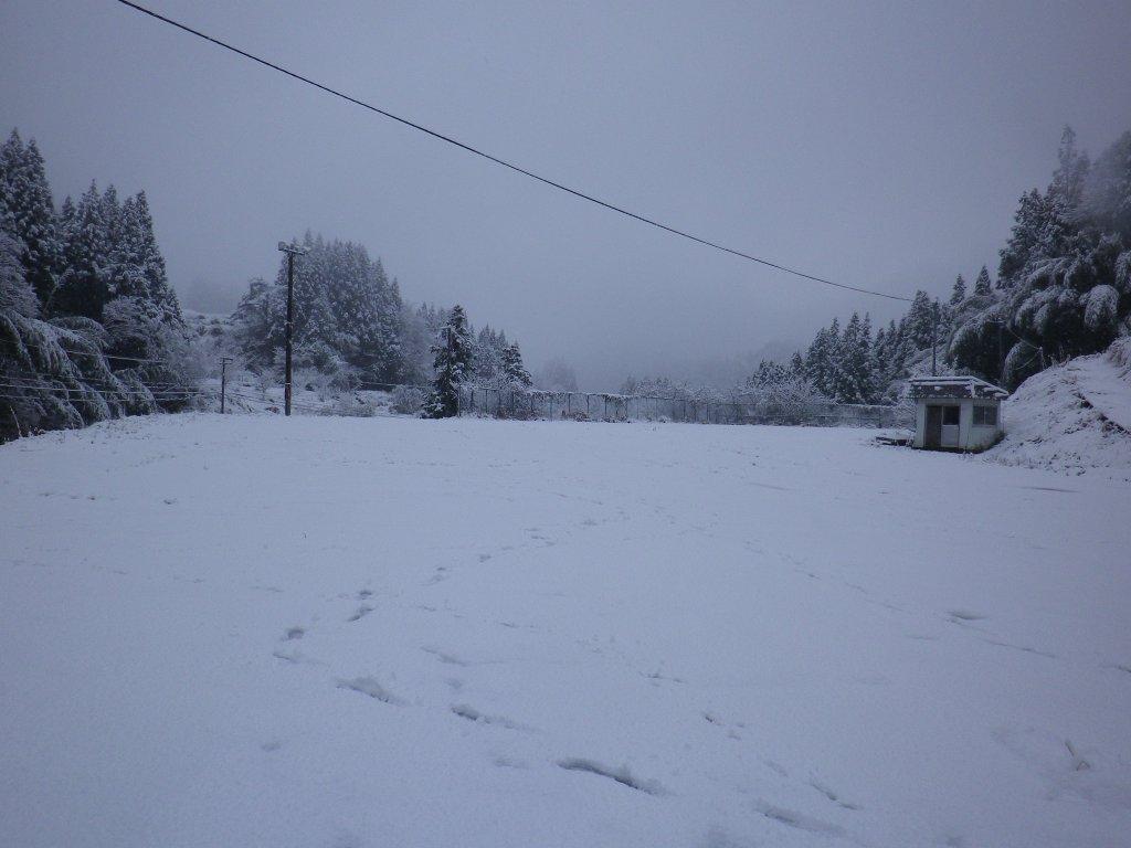 ハチ 北 積雪